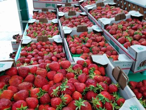 strawberry_170630